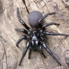 funnel web spider on a tree